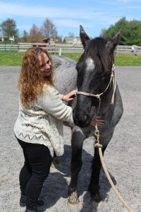Reiki for pets, reiki for horses, reiki for animals