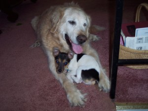 Dog Training Phoenixville Pa